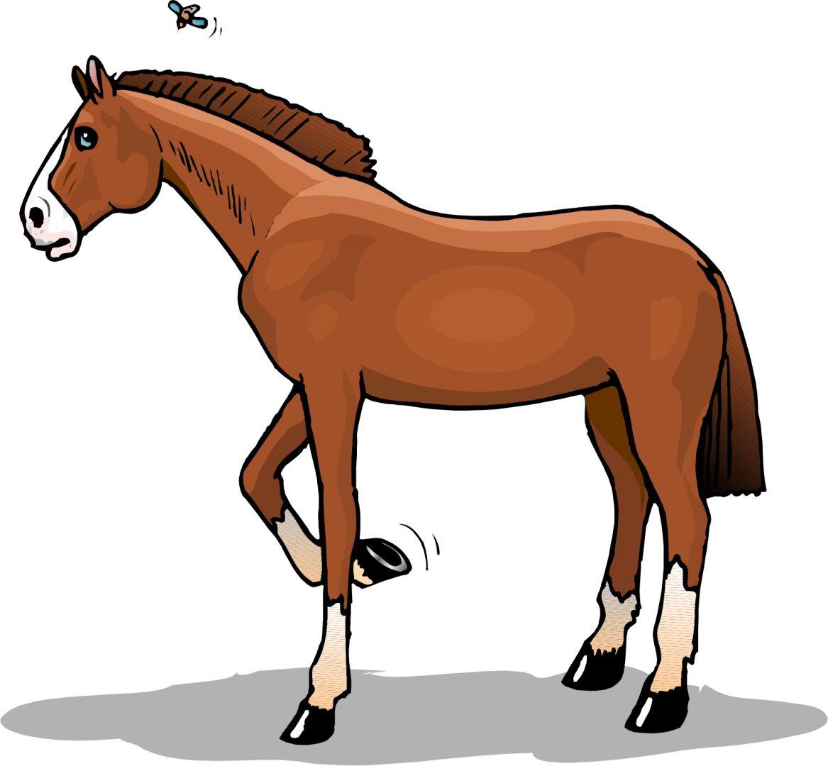 galeria de fotos e imagens desenhos de cavalos