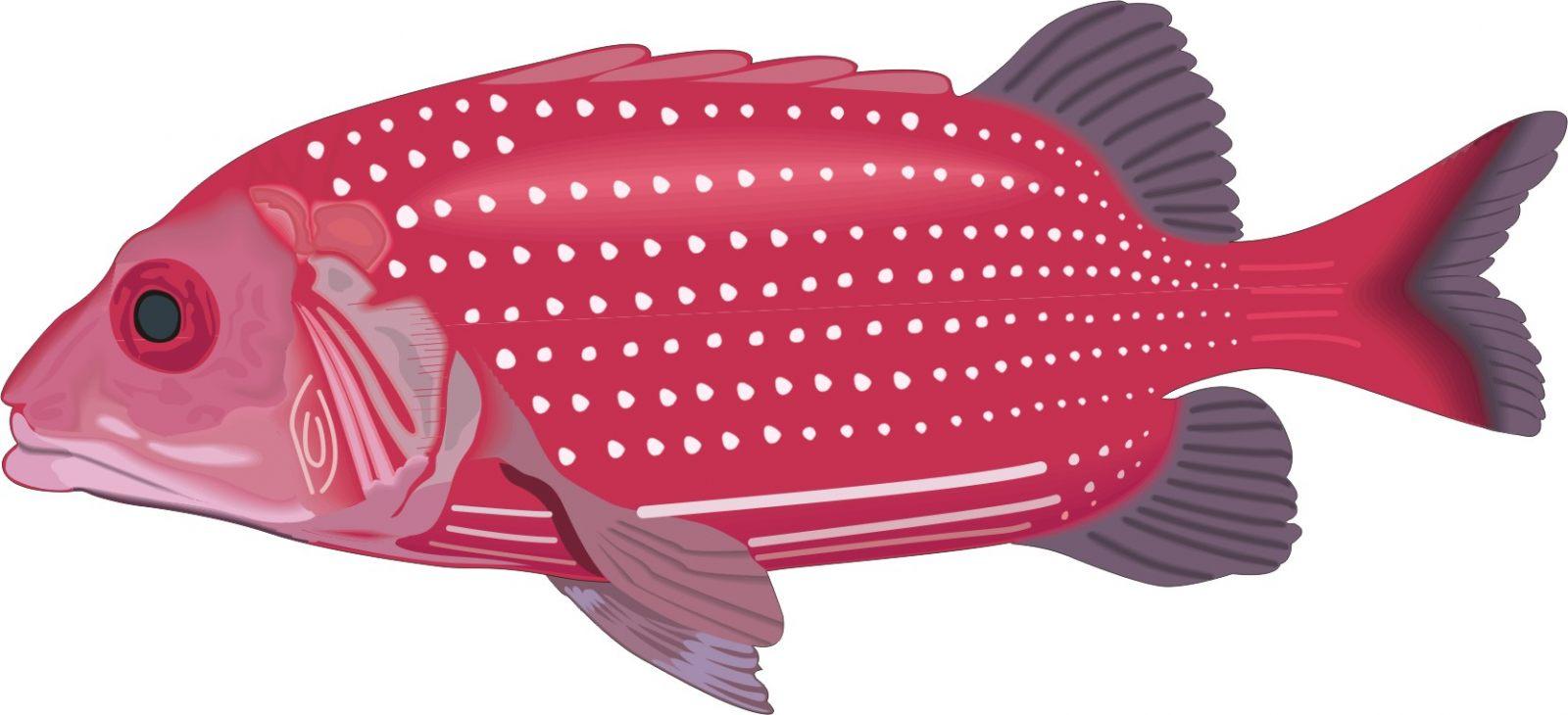 Desenho Realista De Um Peixe Fotos E Imagens