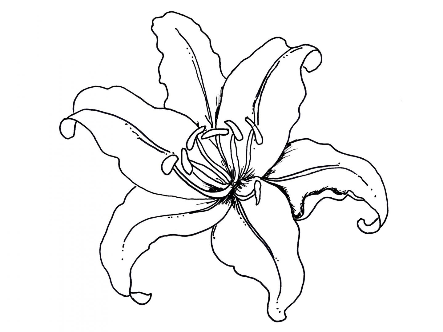 easy lily coloring pages - photo #19