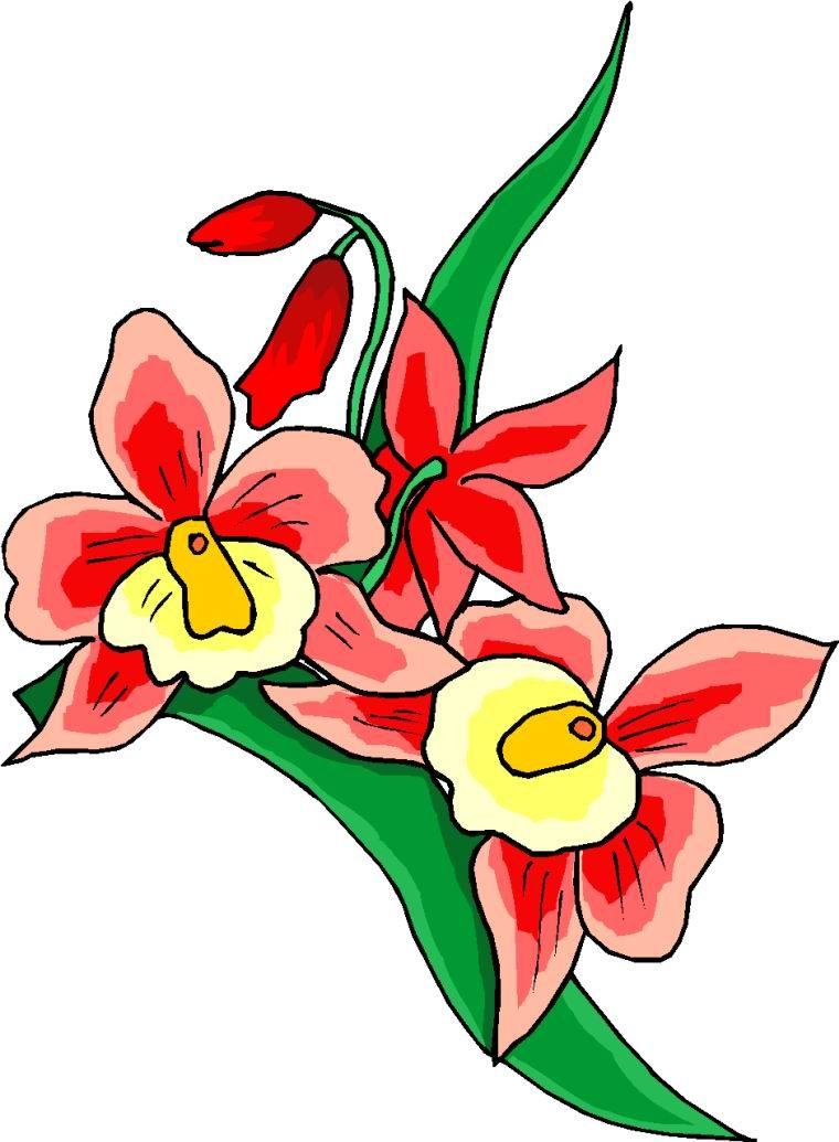 Flores vermelhas :: Fotos e imagens
