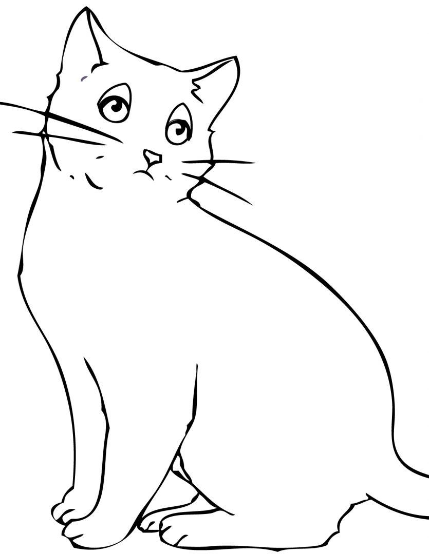 Gato Com Bigodes Fotos E Imagens