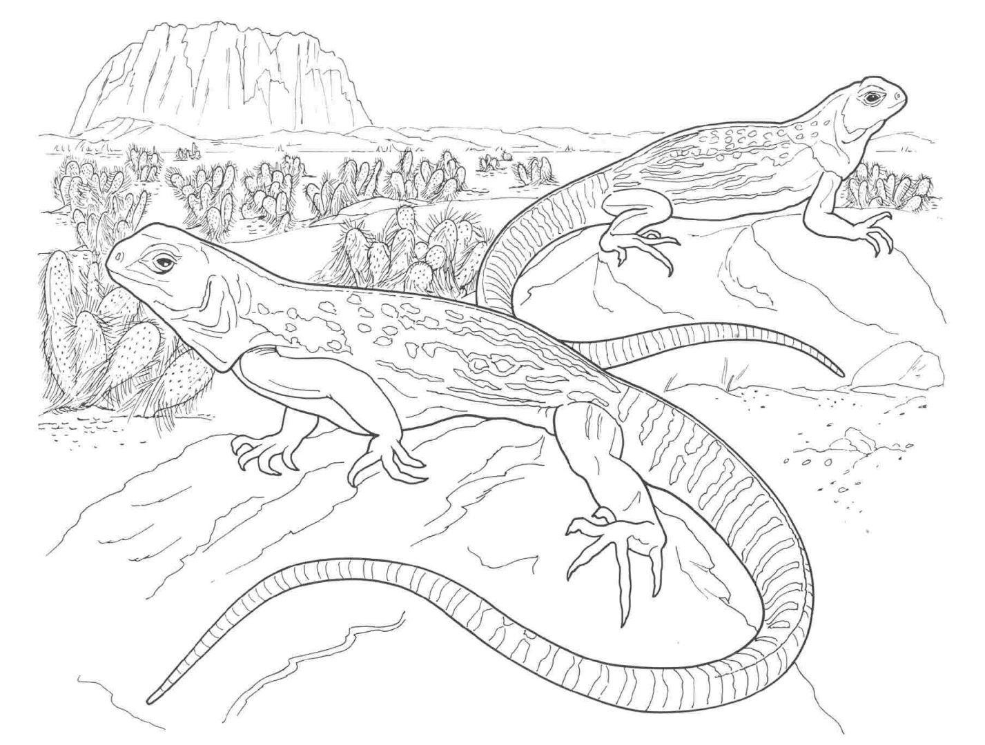 galeria de fotos e imagens desenhos de animais para colorir