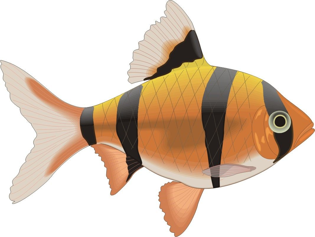 Galeria De Fotos E Imagens Desenhos De Peixes